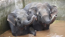 Elephants rescued from China water tank