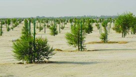 Trees planted for the man-made forest (supplied picture).