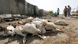Dead chickens are seen at the site of a suicide bomb attack in the Amil district of southern Baghdad