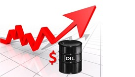Oil up over $50, US inventory drop balances OPEC doubts