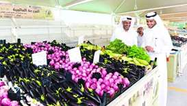 80 Qatari farms take part as sale of local produce begins