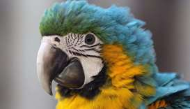 A blue-and-yellow macaw sits on it's cage