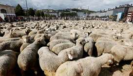 French sheep farmers protest against protection of wolves
