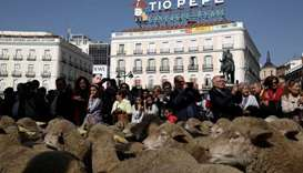 A flock of sheep walks past Puerta del Sol, Madrid's famous landmark