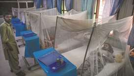 Over 50,000 dengue cases now: report