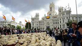 Flocks of sheep are herded in front of the city hall in Madrid, Spain