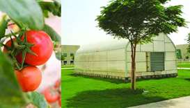 All Khayr Qatarna produce has been granted the status of 'Premium Products' by the Ministry of Munic