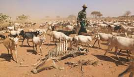 Millions at risk amid drought in Kenya