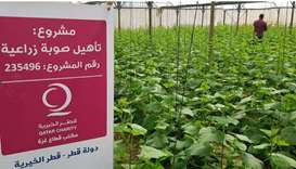 World Food Day: Qatar Charity's sustainable projects enhance food security