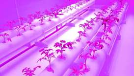"""Agrico's research and development for LED hydroponic system is """"very promising"""" and can help to furt"""