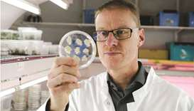 Head of Plant Biotechnology Heiko Rischer show cells of sustainable coffee at the VTT research lab i