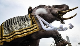 An elephant is paraded in front of the Grand Palace to pay respects
