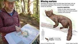 Where have all the martens gone?