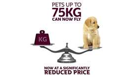 Qatar Airways reduces prices for domestic pets