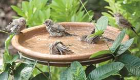 Your backyard birds need water