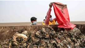 Workers gather dying birds in a truck at Sambhar Salt Lake yesterday in India's northern state of Ra