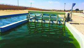 Total, QU launch algae-based research collaboration