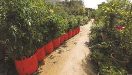 Bags of plants with weight and ordinal numbers written on them are seen before being transported.