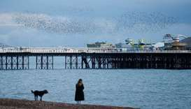 Starlings murmuration seen above Brighton Palace Pier