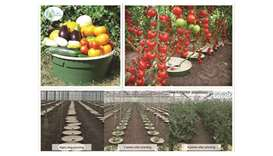The technology can be used in planting wild and fruit trees, vegetables and various shrubs. It consu