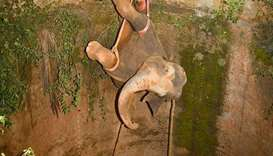 The elephant being lifted up using a crane