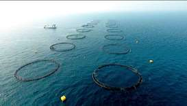 Floating cage tech pioneer Samkna launches offshore aquaculture project