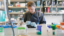 AT WORK: Matthew Porteus, 51, professor of paediatrics at Stanford School of Medicine, pipettes DNA