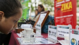 A child looks at information displayed by the Peruvian Health Ministry on mosquitos (Aedes aegypti)