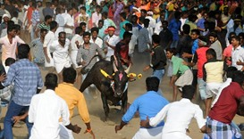 Jallikattu, an annual bull fighting ritual, on the outskirts of Madurai
