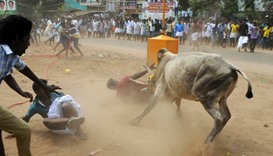 Jallikattu is more than 2,000 years old and is a deep-rooted part of Tamil Nadu