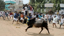 Two killed, 41 injured in bull-taming sport in southern India