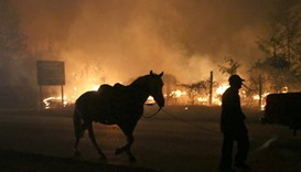 A villager and his horse are seen next to a forest fire in the town of Santa Olga