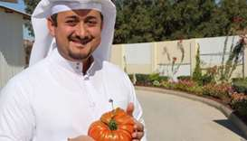 Local farm grows biggest organic tomato in Qatar
