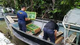 MMEA officials examine the exotic birds saved from the smugglers. Picture courtesy: The Star