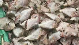 Unfit to consume: 60kg of fish destroyed