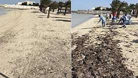 Abu Zaluf beach cleaned under MME campaign