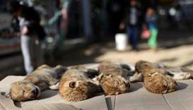 Bodies of four baby lion cubs that died in a zoo, are seen in the southern Gaza Strip