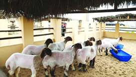 The festival specialises in the field of livestock heritage