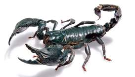 Chinese man fined for trying to smuggle live scorpions from Sri Lanka