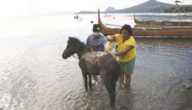 Residents living at the foot of Taal volcano wash their volcanic ash-covered horses after rescuing t
