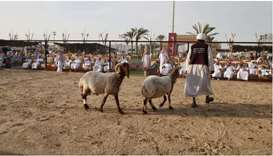 Katara will launch tenth edition of the Halal Qatar Festival 2021 (goats and sheep) from February 13