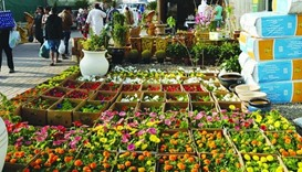 Flower festival to conclude on Saturday