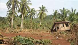 A damaged house is seen past felled banana trees in Barangay San Mateo Borongan in eastern Samar.