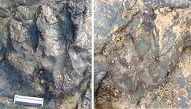 picture released by Parks Victoria on December 20, 2017, shows a dinosaur footprint (L) before it wa