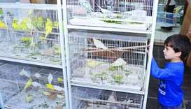 Winter brings brisk business to Souq Waqif pet shops