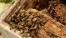 UN, EU call for global action to protect bees