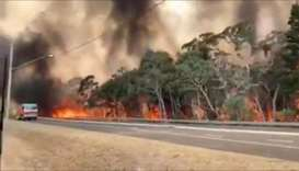 Flames engulf a row of trees at the side of a road on Gospers Mountain in New South Wales, Australia