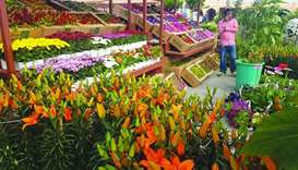 Mahaseel sees huge demand for locally-grown flowers