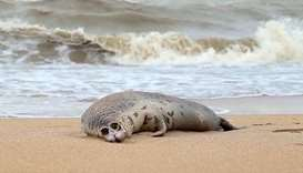 Russia probes mystery seal die-off