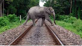 An elephant crossing rail track in Assam